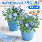 「栽培セット ネモフィラ 青い花 花の種 室内 ハートポット付き 栽培キット 癒し」の画像