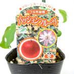 パッションフルーツ 緑のカーテン グリーンカーテン【3.5号P】