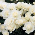 roseshop_112-1302031000-001b