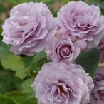 バラ苗 ノヴァーリス 国産大苗6号スリット鉢 ハイブリッドティー(HT) 四季咲き大輪 紫系
