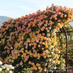 roseshop_112-1303040104-001