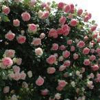 roseshop_122-1303080106-002b