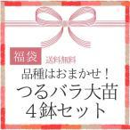 2017福袋 つるバラ大苗4鉢 品種はおまかせ!/同梱不可/順次配送