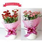 ショッピングバラ m10 母の日ギフト ミニバラ鉢植え 赤・ピンクの2色から/母の日の贈り物2017 バラ鉢植え
