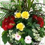 季節のお花をかわいい寄せ植え♪置くだけでプチガーデン