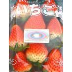 いちごイチゴさが県産摘みたて苺さがほのか4パックセット(1パック250g入)でお届け致します。