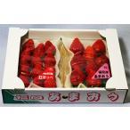 いちごイチゴ苺摘みたて博多あまおう、紅ほっぺデラックス 300g× 2パックセット贈答用