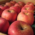 個数限定 長野産 サンふじりんご 自家用10kg 訳あり 送料無料