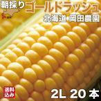 とうもろこし 北海道産 ゴールドラッシュ 2Lサイズ × 20本 朝採り 産地直送 スイートコーン トウモロコシ とうきび 七飯町 岡田農園