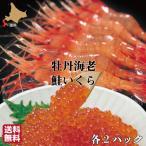 Salmon Roe - 北海道産 鮭 いくら 醤油漬け 1kg + ボタンエビ 2kg 詰め合わせ 海鮮 セット 八雲町 長谷川水産 ミノリ商事
