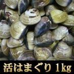 【お中元/ギフト/海鮮バーベキュー/BBQにも】<活きはまぐり1kg>お吸い物、酒蒸し、天ぷらに!【冷蔵便同梱可】