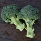 ブロッコリーの種 恵麟 コート5千粒 ( 野菜の種 )