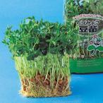 スプラウトの種 豆苗(とうみょう) 1L