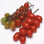 ミニトマトの種  おみつ  小袋 ( 野菜の種 )