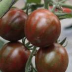ミニトマトの種 ブラッディタイガー 8粒 ( 野菜の種 )