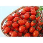 ミニトマトの種 グラッセレッド 20粒