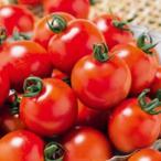 ミニトマトの種  千果99  1000粒 ( 野菜の種 )