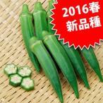 オクラの種 大和ティダ 小袋(5ml)