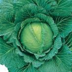 キャベツ 種 【 四季獲 】 小袋(2000粒) ( 種 野菜 野菜種子 野菜種 )