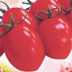 ミニトマトの種 シュガリーテール(短楕円) 小袋(15粒)