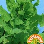 葉菜の種 アスパラガスレタス(セルタス) 小袋 ( 野菜の種 )
