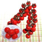 ミニトマトの種 CFプチぷよ キダネ100粒 ( 野菜の種 )