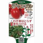 ミニトマトの種 ジャングルトマト 小袋 ( 野菜の種 )