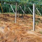 緑肥の種 オオナギナタガヤ ゾロ 1kg