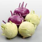 キャベツの種 サラダコールラビ ラビオとラビコ 実咲小袋