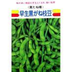 枝豆種 早生黒がね ( えだまめの種 ) 小袋 約1dl 家庭菜園 ガーデニングにおすすめの 野菜種♪ ( 野菜の種 )