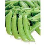 スナップエンドウの種 ホルンスナック 小袋