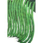 つるありインゲン豆の種 ケンタッキーワンダー 30ml