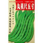 つるありインゲン豆の種 尺五寸 30ml
