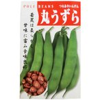 つるありインゲン豆の種 大丸うずら 小袋