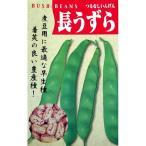 つるなしインゲン豆の種 長うずら 50ml