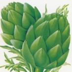 ハーブの種 アーティチョーク グリーン 小袋 ( 野菜の種 )