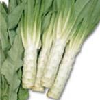 レタスの種 茎レタスケルン 実咲小袋