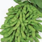 枝豆の種 夏の装い 1dl ( 野菜の種 )
