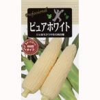 トウモロコシの種 春まき ピュアホワイト (とうもろこしの種) 小袋 約 小袋 ガーデニング 家庭菜園におすすめの 野菜種♪