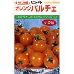 ミニトマトの種 オレンジパルチェ 100粒 ( 野菜の種 )