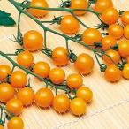 ミニトマトの種 オレンジキャロル ペレット200粒 ( 野菜の種 )