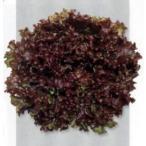 レッドファルダー (レタスの種) L5千粒