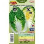 春笑 (白菜の種) 小袋 約ペレット100粒
