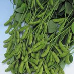 枝豆の種 快豆黒頭巾 PF(1dl) ( 野菜の種 )