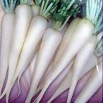 大根の種 白茎亀戸 小袋 約20ml