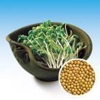 スプラウトの種 大豆もやし (姫大豆) の種 小袋 約60ml
