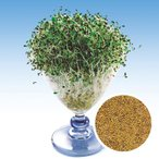 スプラウトの種 アルファルフア の種 小袋 約40ml