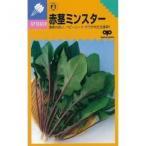 赤茎ミンスター (ほうれん草の種) 小袋 約1dl