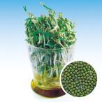スプラウトの種 グリーンマッペ (緑豆) の種 小袋 約60ml