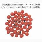 ミニトマトの種 豆トマト 小袋(0.1ml) ( 野菜の種 )